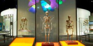 hall-of-human-origins
